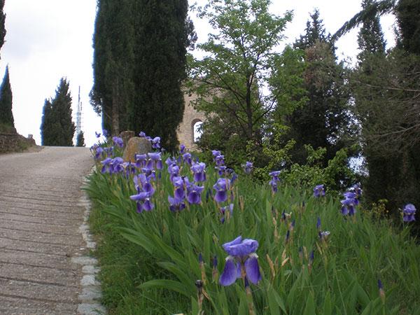 Flora camí al castell La Tossa de Montbui