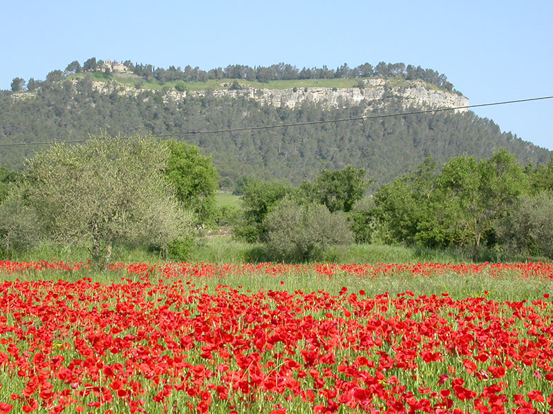 Paisatge Carena de La Tossa de Montbui i rovelles
