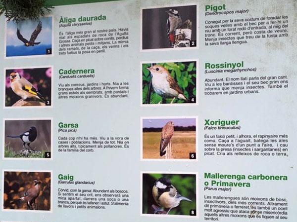 La Tossa de Montbui Cants d'ocells de l'entorn
